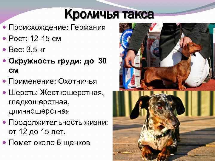 Сколько лет живут собаки разных пород