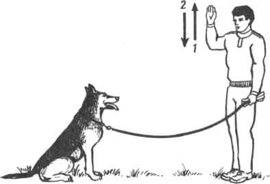 """Как научить собаку команде """"сидеть!"""": инструкция"""