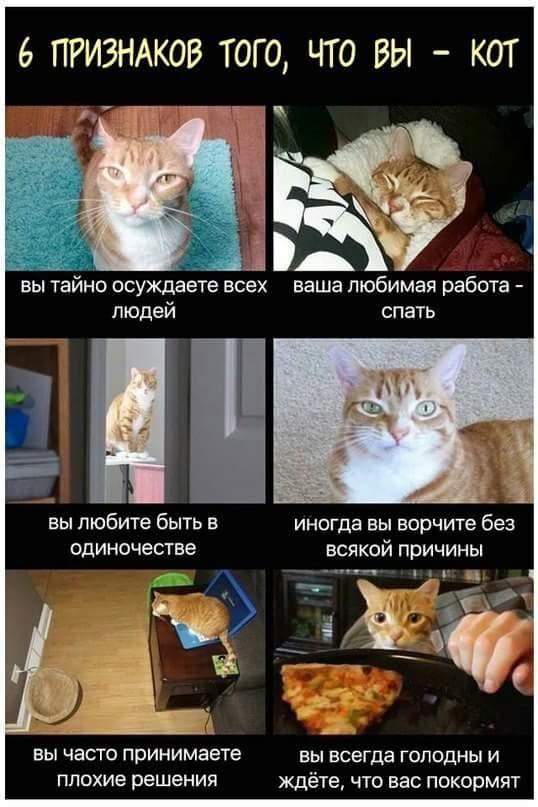 Наша кошка нас раздражает. - страна мам