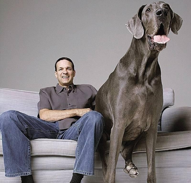 Самые умные породы собак в мире   science debate