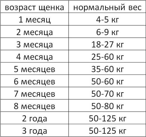 Рост и вес щенка немецкой овчарки по месяцам, сколько весит взрослая собака и какие ее размеры