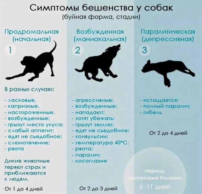 Укусы кошек человека
