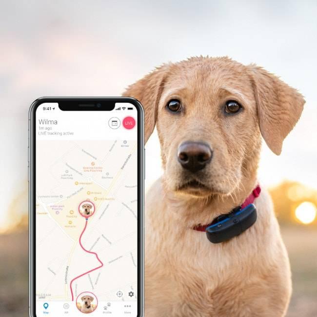 Навигатор для грибника - трекер, возвращатель, программа для андроид и айфон