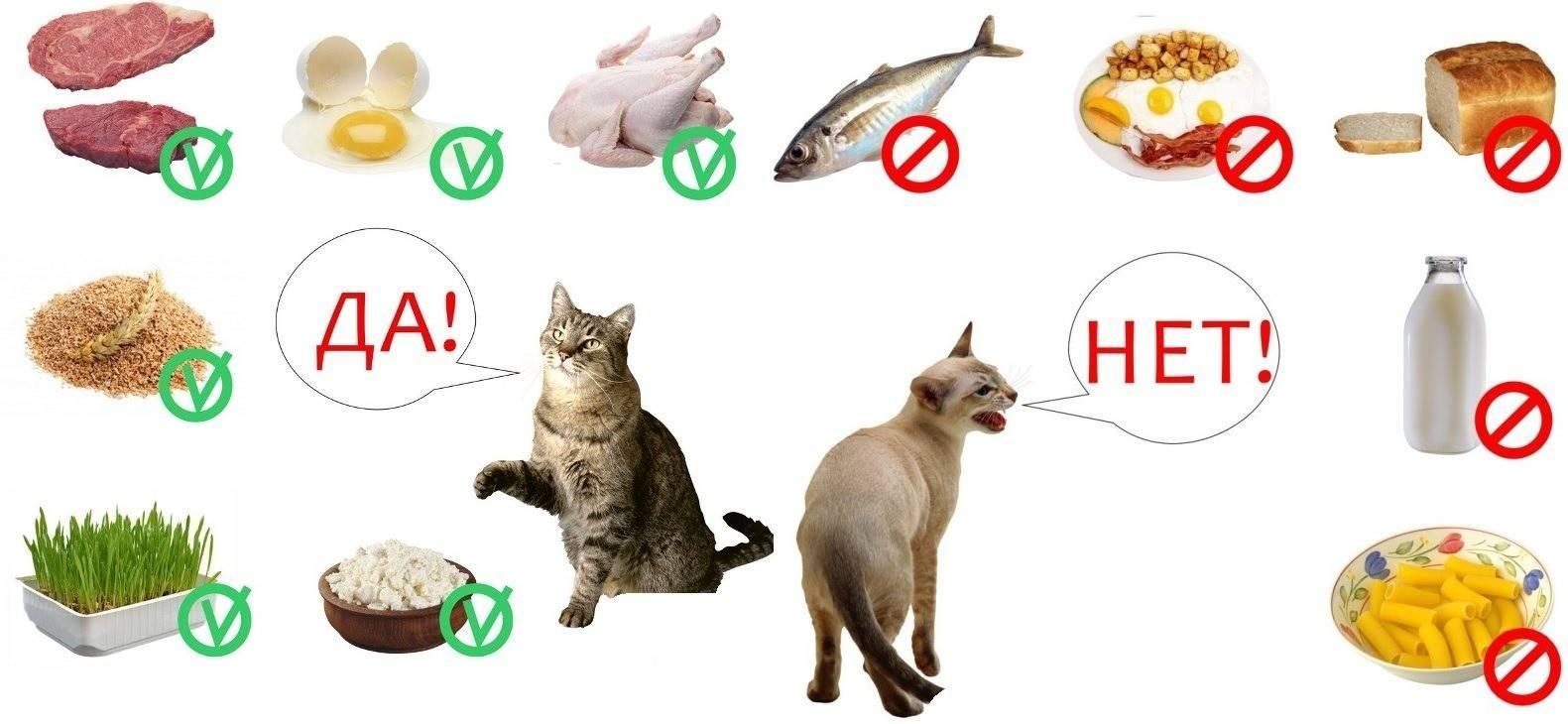 О вреде сухого корма для кошек.