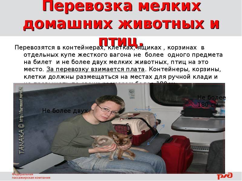 С собакой в поезде по россии