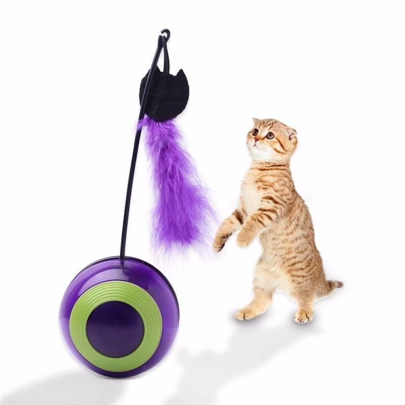 Десять самых умных пород кошек — изучаем все нюансы