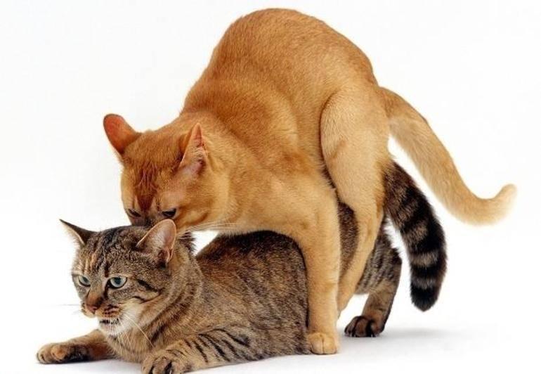 Кошачий характер ... какой он? признаки, определяющие характер вашей кошки - домашние животные