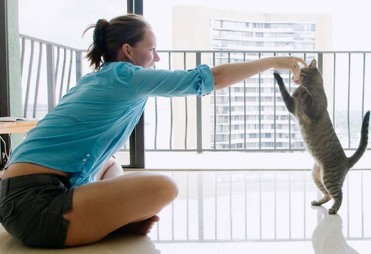 Дрессировка кошек - дрессировка кошек, дрессировка кошек в домашних условиях, дрессировка котов, дрессировка котят - всё о кошках и котах