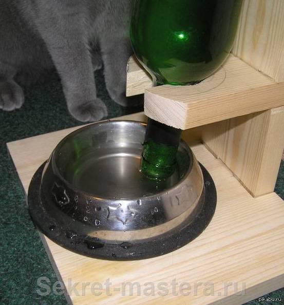 Автокормушка для кошек: как выбрать, какими бывают, как сделать своими руками