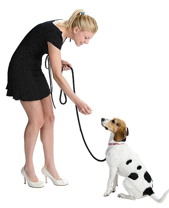 Как приручить собаку или щенка к новому хозяину