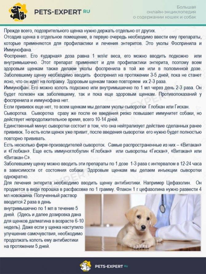 Понос у собаки: желты, зеленый, черный, лечение и правильное питание