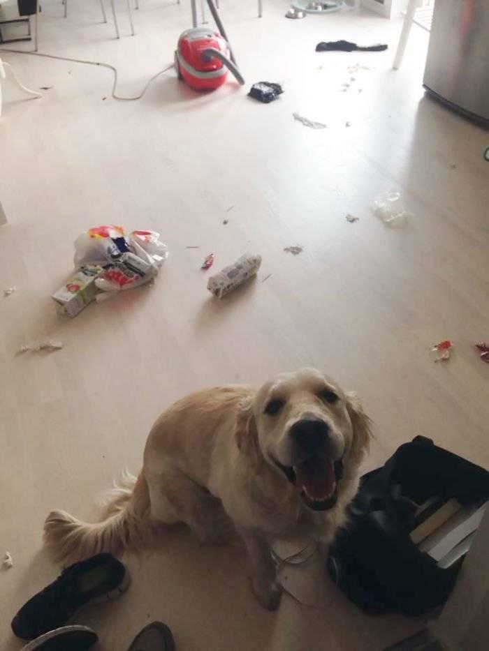Как самостоятельно отучить собаку выть в отсутствие хозяев: что делать хозяину