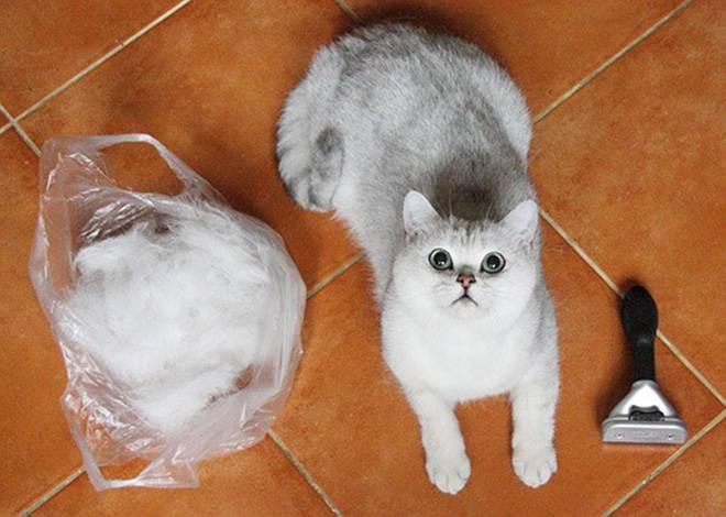 Как в домашних условиях вывести шерсть из желудка у кошки: корма для выведения комков, симптомы проблемы
