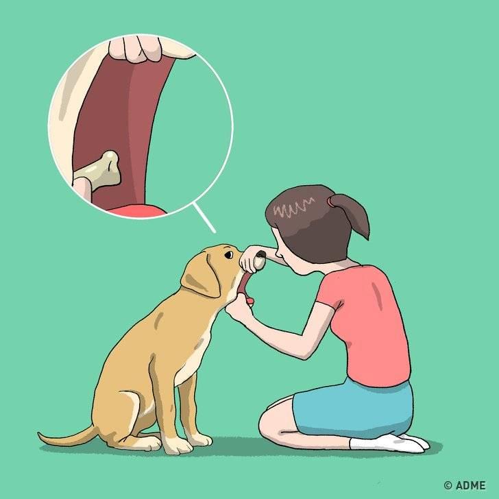Кашель у собаки, как будто она подавилась: причины и лечение симптома