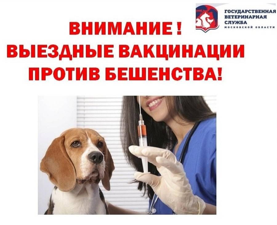 Вакцина от бешенства для котов и кошек: делаем прививку правильно