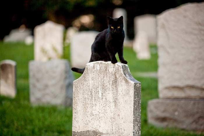 Как похоронить кошку?