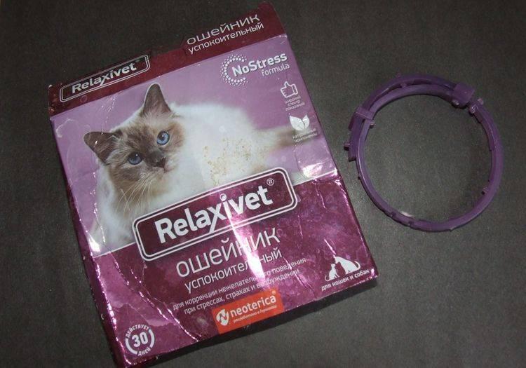 Успокоительное для кошек : обзор эффективных средств
