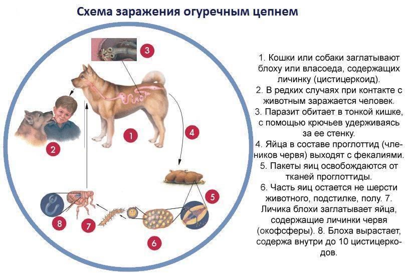 Можно вылечить гепатит у кошки