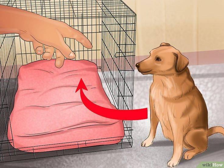 Адаптация дикой собаки: инициатива и контакт с человеком. как приручить дикую собаку?