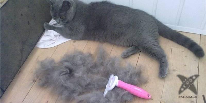 Почему кошка выдергивает себе шерсть?