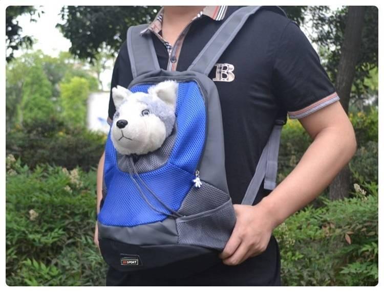 Параметры выбора рюкзака для собаки, в котором питомцу будет удобно