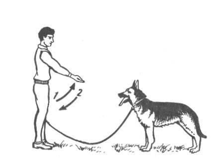 Как научить собаку команде «сидеть» - wikihow