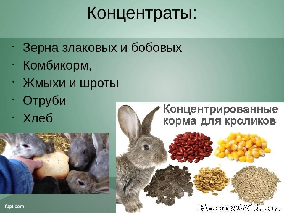 Какую траву нельзя давать кроликам, а какой можно кормить