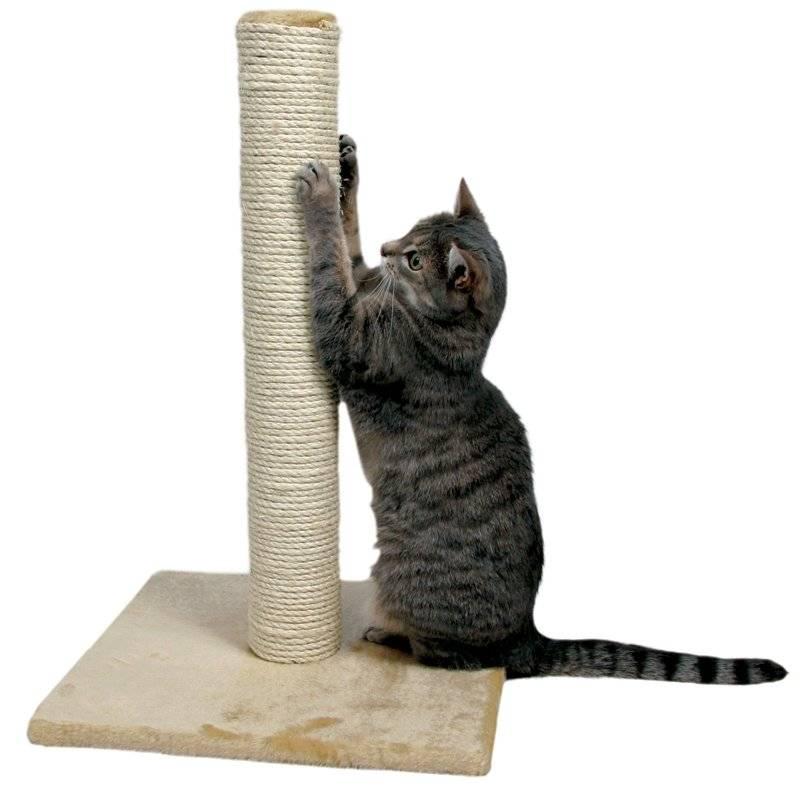 Как приучить котенка и взрослую кошку к когтеточке ?