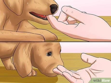 Как отучить щенка кусаться и хватать – за руки, ноги, во время игры