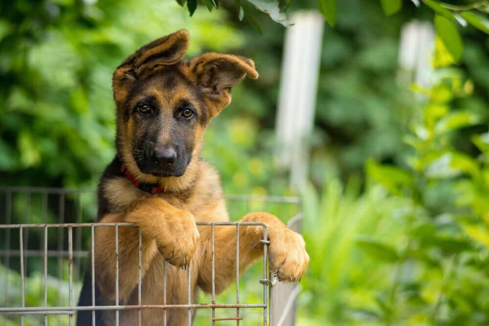 Какую собаку лучше завести в частный дом