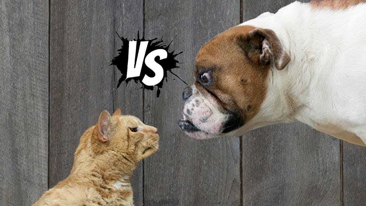 Могут ли животные плакать или смеяться?. все обо всем. том 1