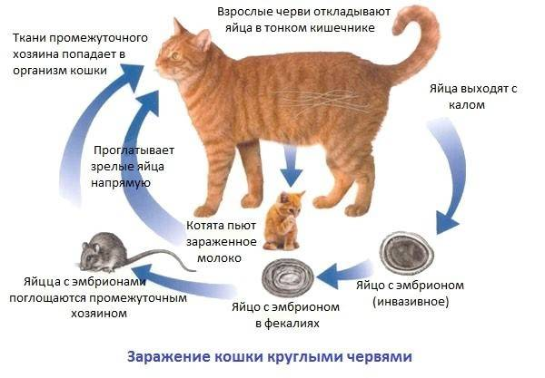 Обезвоживание у кота: лечение в домашних условиях