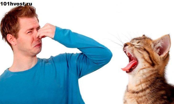 Причины неприятного запах от кошки и его источники