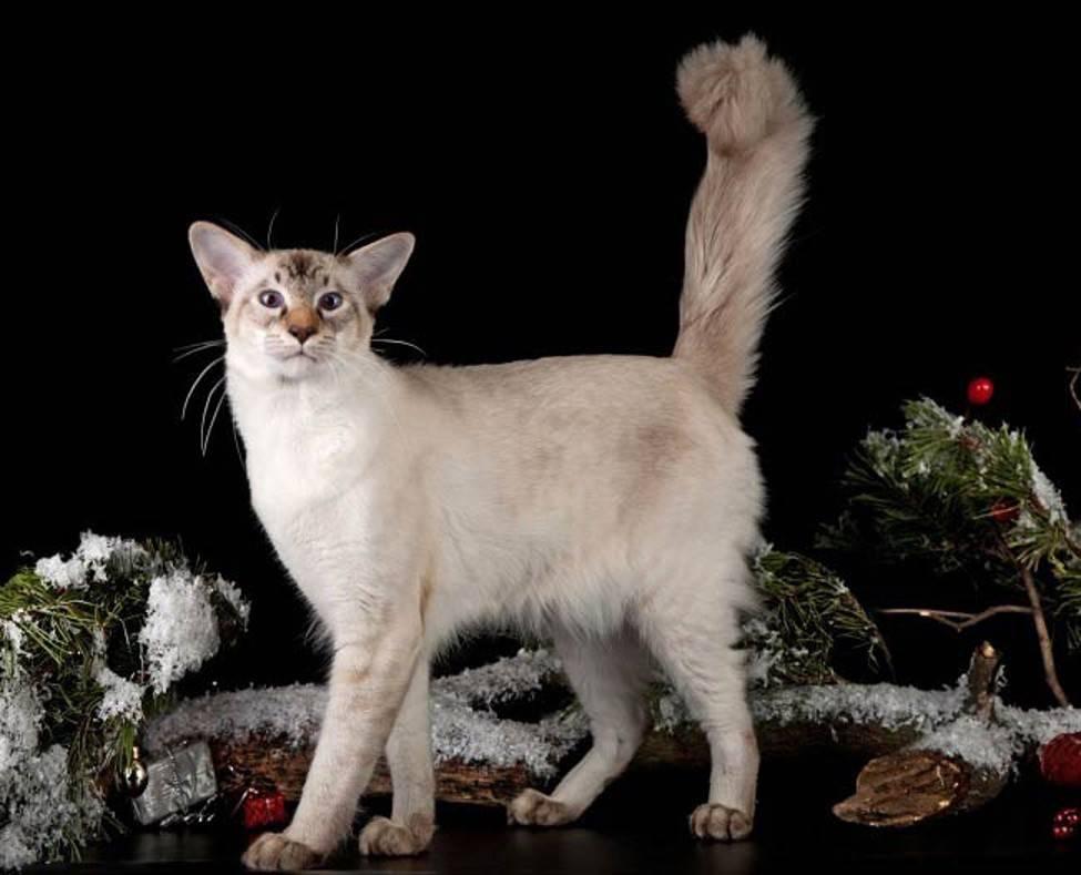 Топ 15: самые популярные породы кошек 2020 [фото и названия] - муркотэ