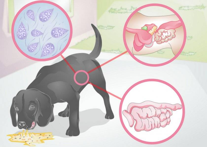 Собаку рвет желтой или белой пеной: что делать | после еды, желчью