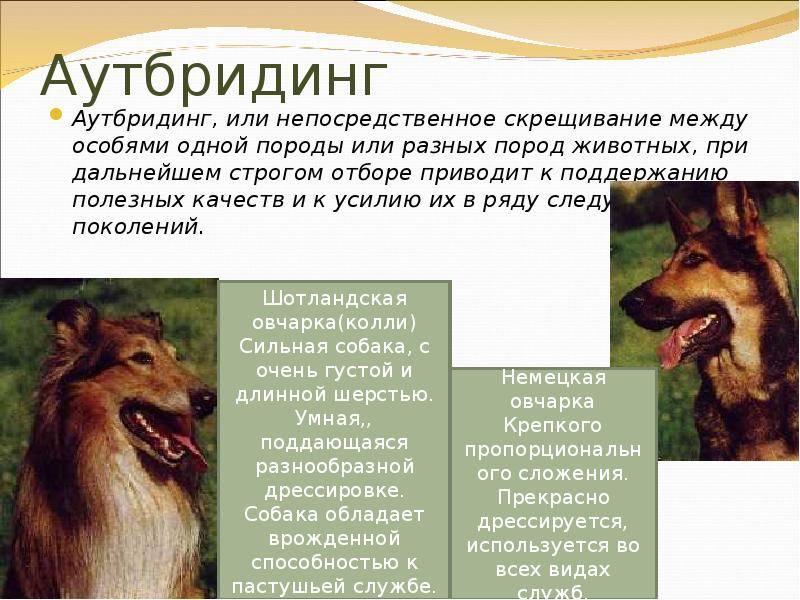Гибридизация    [занимательное собаковедение]