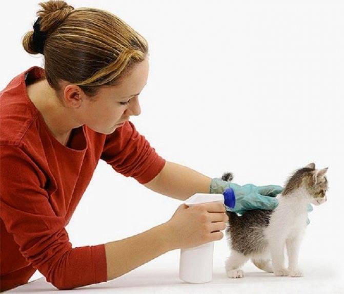 Вы нашли на улице бездомного котенка. что делать? | кот в окошке