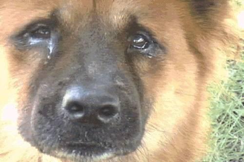 Собака скулит без причины и не находит себе места