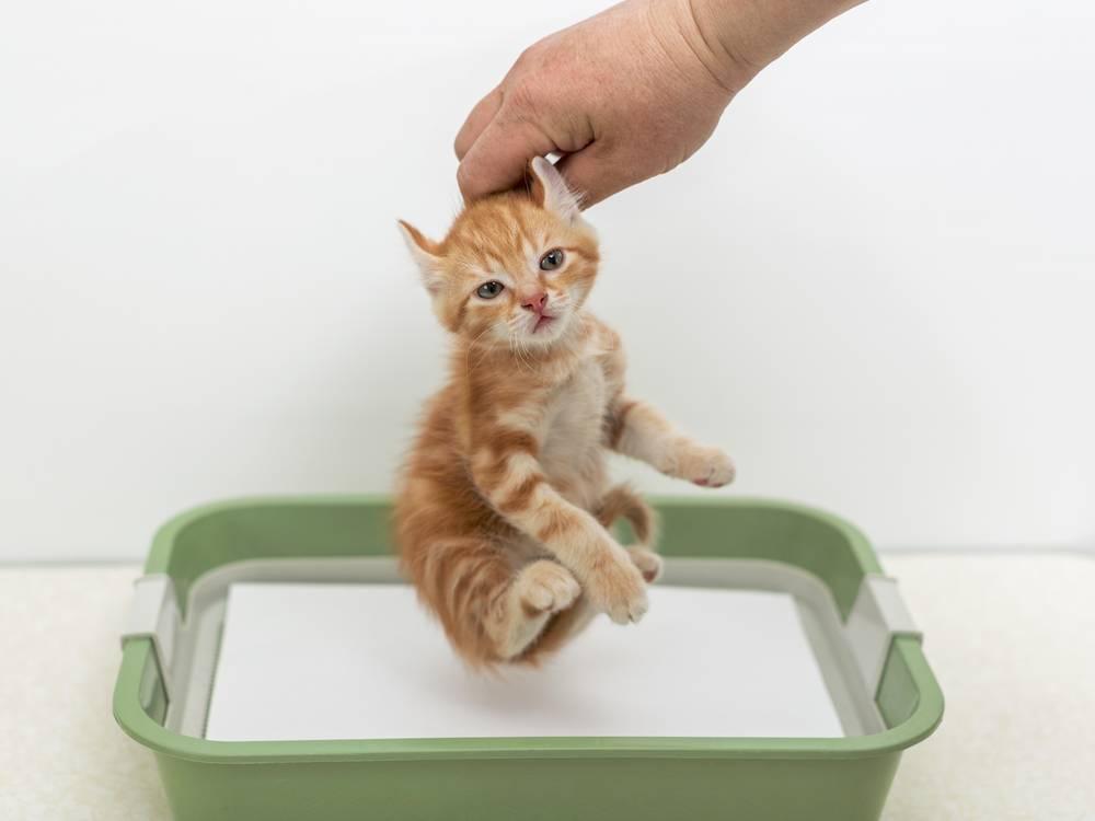 Почему кошка или кот стали писать где попало