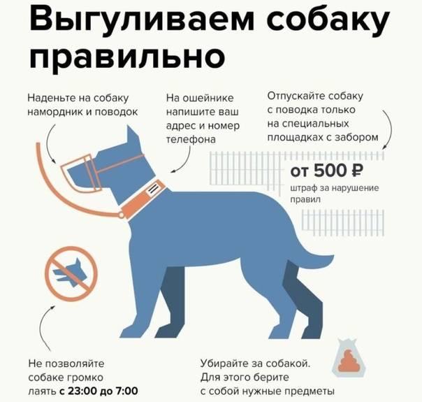 Закон о выгуле собак в россии на 2020