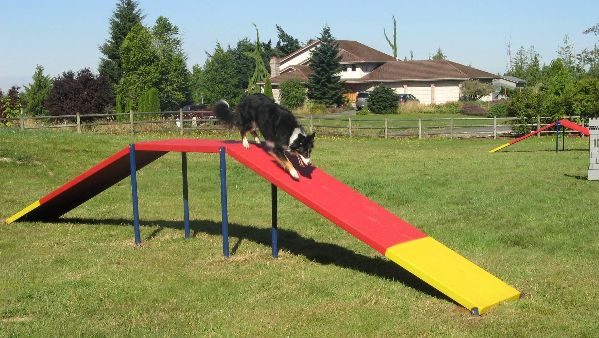 Аджилити для собак - что это, виды снарядов на площадке (трассе), лучшие породы, правила спорта. как начать тренировки, где пройти обучение аджилити - dogtricks.ru