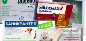 Как глистогонить кошку. ? необходимость дегельминтизации. особенности процедуры. правила дегельминтизации.