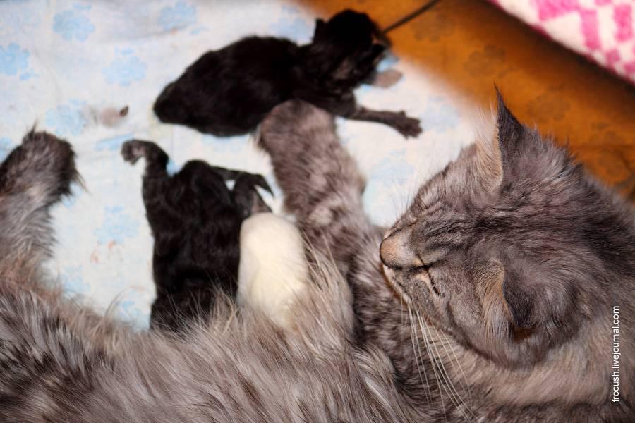 Особенности ухода за котятами: когда котята открывают глаза?