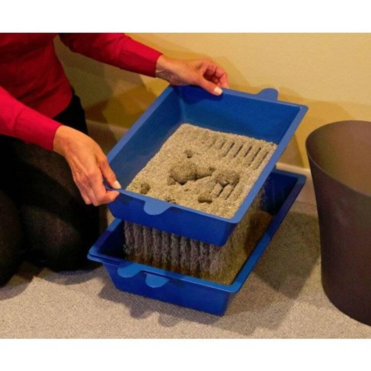 Советы кошатникам: как сохранить дом чистым, а кошку — здоровой - лайфхакер