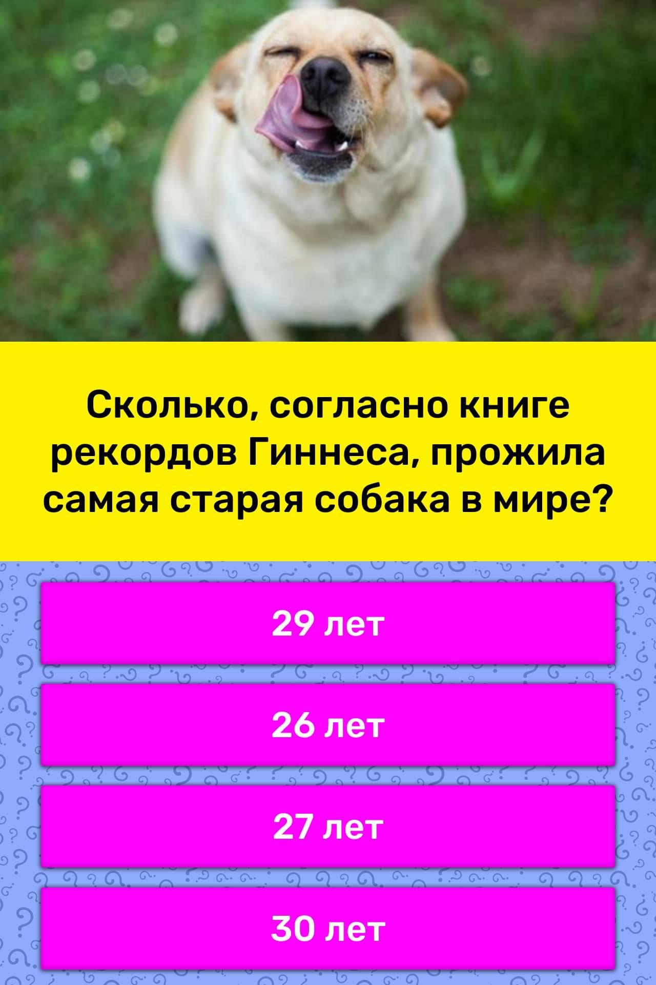 Продолжительность жизни собак: факторы, влияющие на это, сколько в среднем живет собака в домашних условиях?