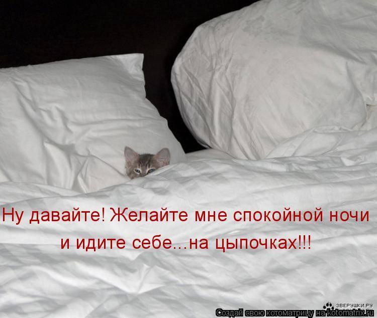 7 причин, зачем кошка мнёт лапами одеяло и человека, что означает этот милый жест