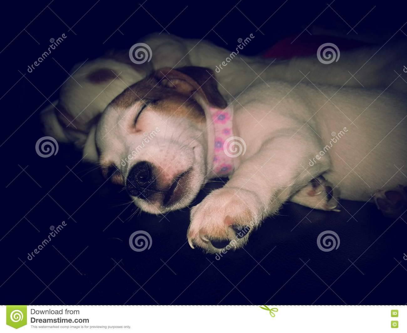 Приучить собаку спать со мной. как приучить щенка спать ночью: полезные советы