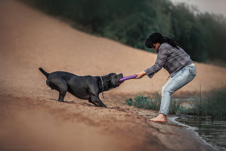 Как выглядят щенки «кане-корсо»: описание породы и развитие питомцев