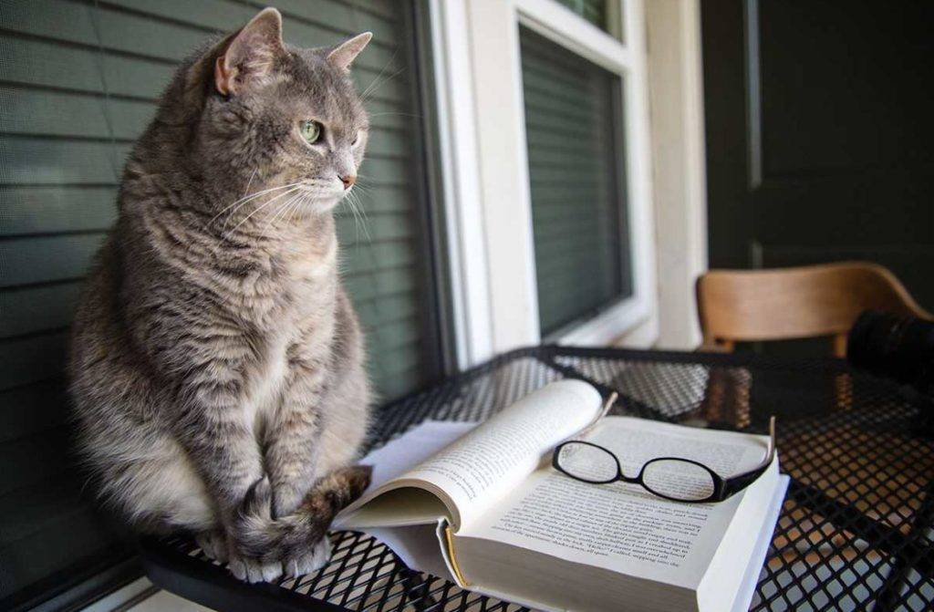 Память у кошек: есть ли она, какая и сколько длится