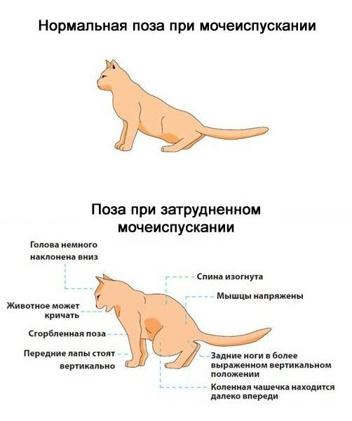 Понос у кормящей кошки: причины, диагностика, лечение